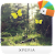 XPERIA™ Magical Spring Theme file APK for Gaming PC/PS3/PS4 Smart TV