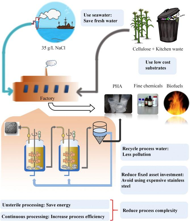 Halophiles, coming stars for industrial biotechnology - ScienceDirect