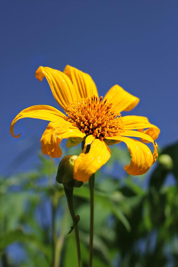 .. by Ichmunandar . - Nature Up Close Flowers - 2011-2013