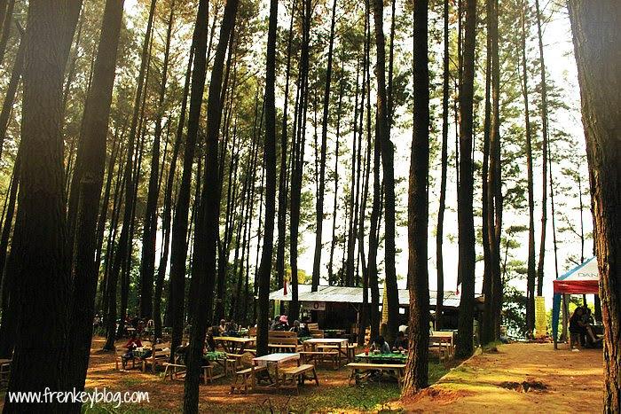 Tempat Istirahat di Hutan Pinus Gunung Pancar