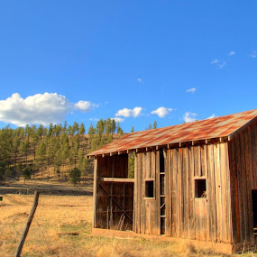 Old Barn by Bonnie Davidson - Buildings & Architecture Architectural Detail ( doors, clouds, cloudcroft, photograph, wood, national, white, forest, windows, new mexico, field, fence, pasture, sky, lincoln national forest, blue, trees, brown, rust, decaying, abandoned,  )