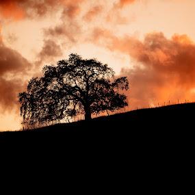 Santa Teresa, Blossom Hill, California by Alex Sam - Landscapes Sunsets & Sunrises ( sunset, cloud, landscape )