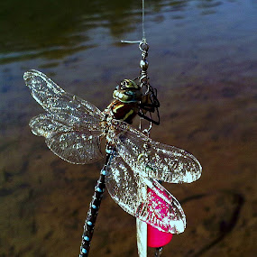 The Big One Got Away by Brian Stout - Animals Insects & Spiders ( macro, lure, fishing, dragonfly, insect,  )