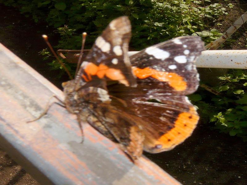 La farfalla di Mario Romano