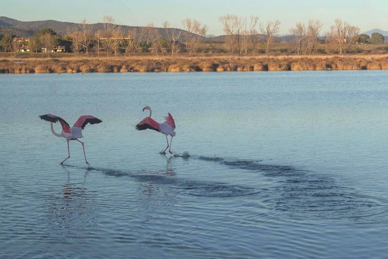 Danzando sull'acqua  di manuela_cannone