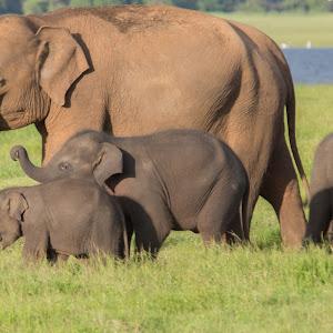 Elephant in Wild 3.jpg