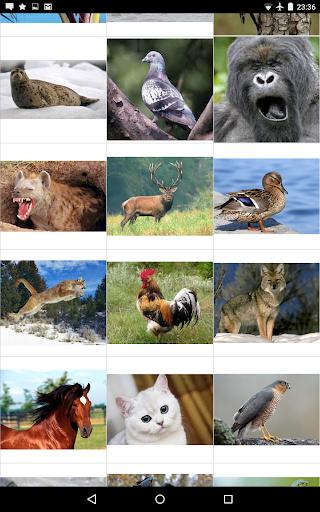 동물의 소리