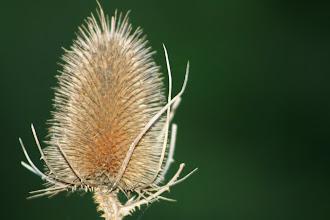 Photo: Plant