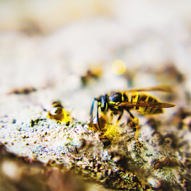 Hungry Wasp   Karissa Best Photography by Karissa Best - Animals Insects & Spiders ( macro, wasp, macro photography, karissa best photography, photography )