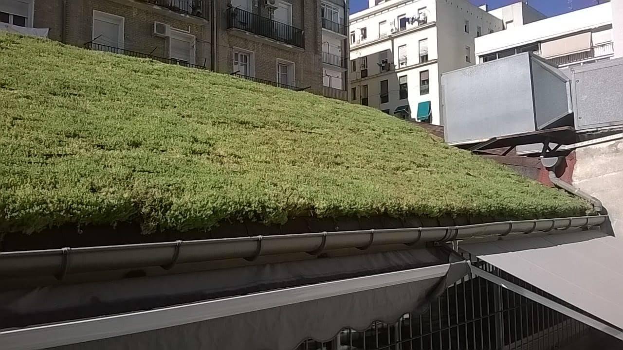 cubierta vegetal de sedum en Madrid