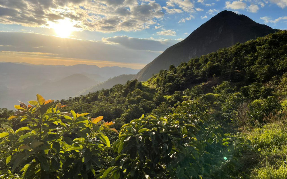 coffee farm sunset