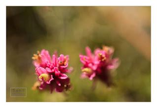 Photo: Eastern Sierras-20120717-695