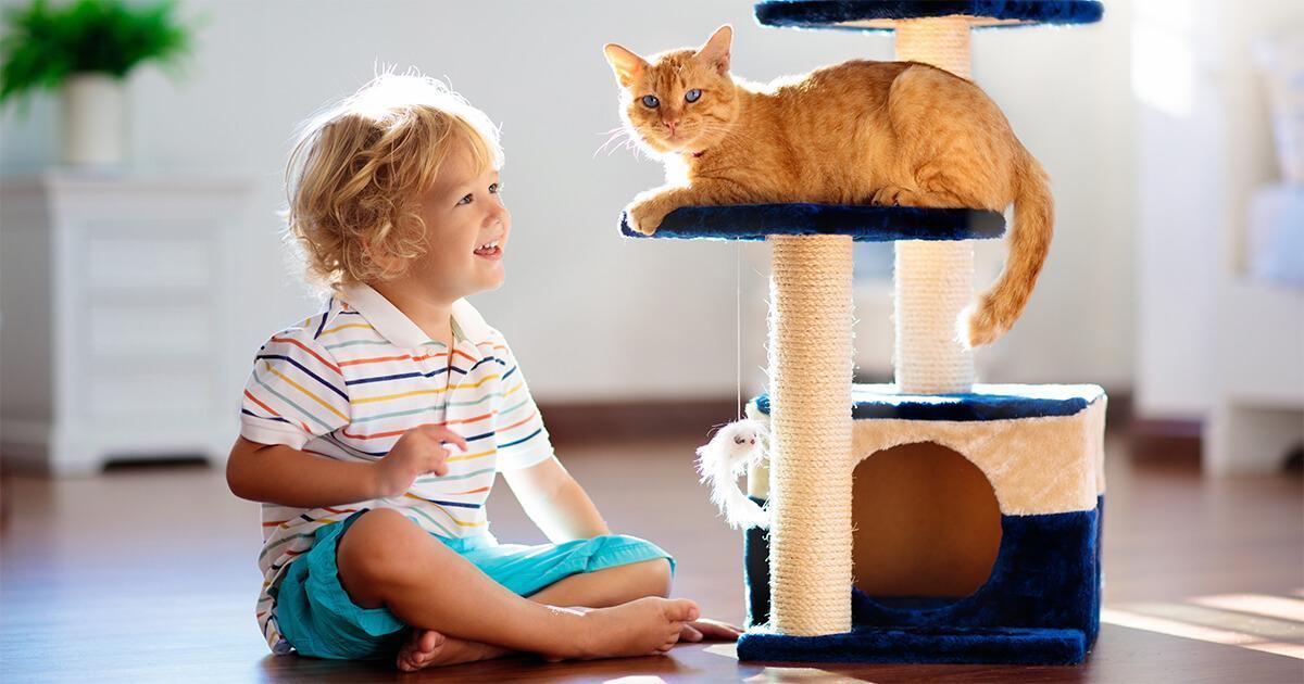 assurez vous que le griffoir soit suffisamment grand pour votre chat