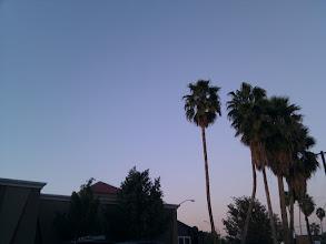 Photo: Palms