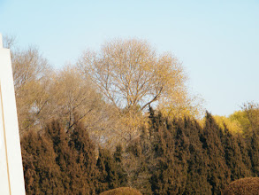 Photo: warrenzh 朱楚甲's works: early winter scenen in Qiqihar railway southern park::kid's keynote in our surroundings.