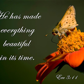 Ecclesiates 3;11 by Steven Faucette - Typography Quotes & Sentences ( bible, old testament, insect, scripture, creation )
