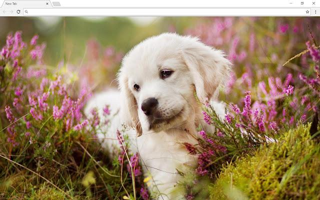 Golden Retriever Dogs Themes - New Tab