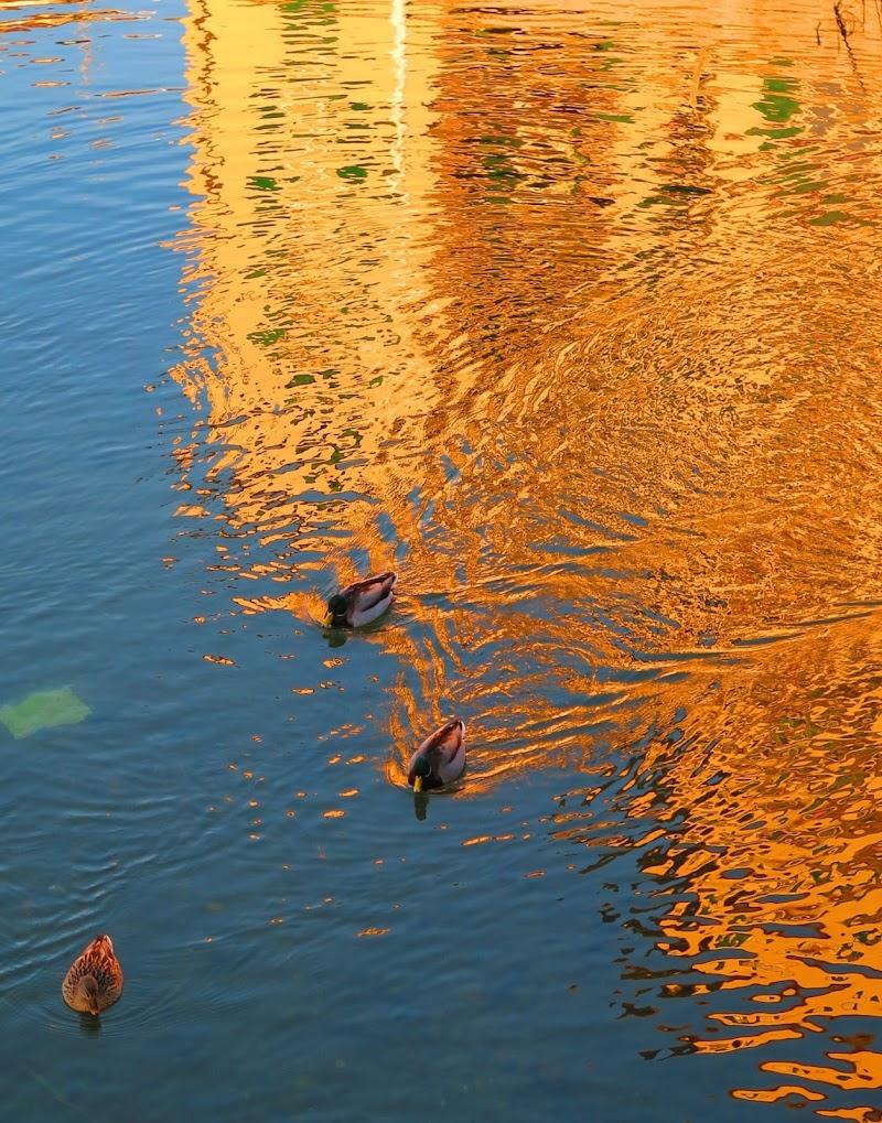 Nuotando felici nel riflesso arancio... di malte