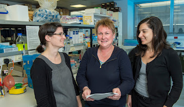 Photo: April 2015. L-R: Dr Mhairi Maxwell (Research Officer), A/Professor Margaret Hibbs (group leader), Dr Evelyn Tsantikos (Research Officer) with a recent publication. Lab link: http://www.med.monash.edu.au/immunology/research/leukocyte-lab.html