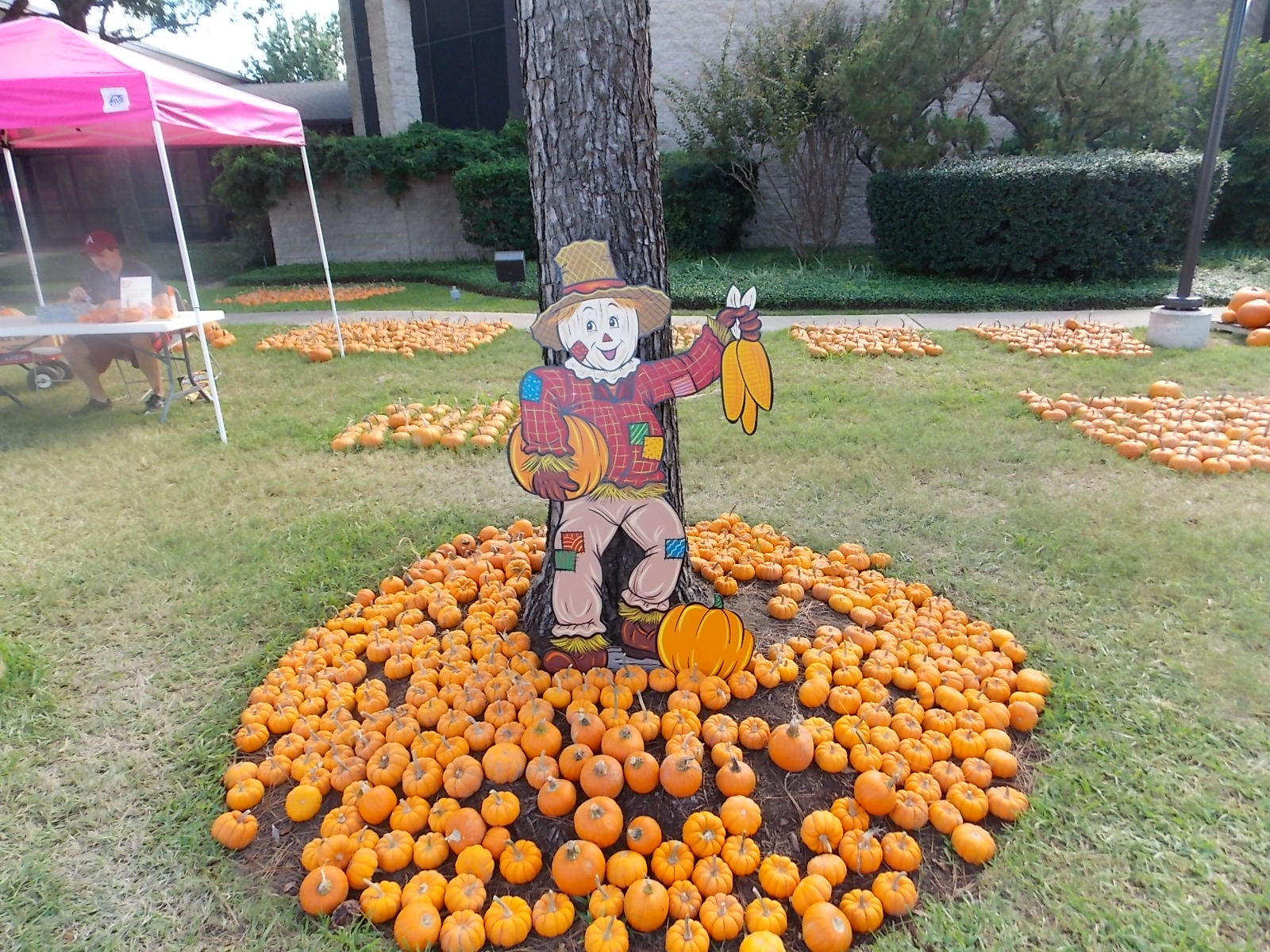 The katy texas blog: halloween event pumpkin patch in katy.