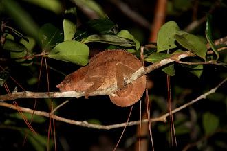 Photo: chameleons...