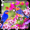 Beauty Birds live wallpaper APK