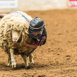 Mutton Busting by Christopher Winston - Sports & Fitness Rodeo/Bull Riding ( fun, kids, mutton, competition, animal )