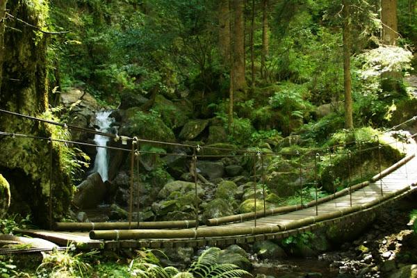 Il ponte di legno di Blondi