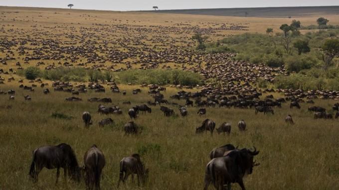 http://itakasafaris.com/wp-content/uploads/Safaris-tanzania-fotografos012-680x383.jpg