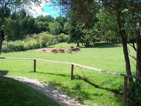 Photo: Bildquelle: Wildpark Gackenbach