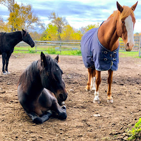 Morning rest  by Ginny Serio - Animals Horses