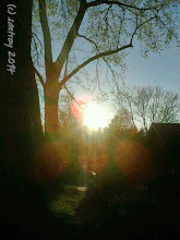 Photo: The sun so very bright I do love you, I am thankful for the strong rays as I walk home on a Spring day.