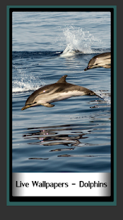 Live Wallpapers – Dolphins - náhled