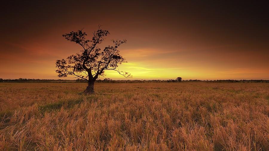 Far apart by Carlos David - Landscapes Prairies, Meadows & Fields
