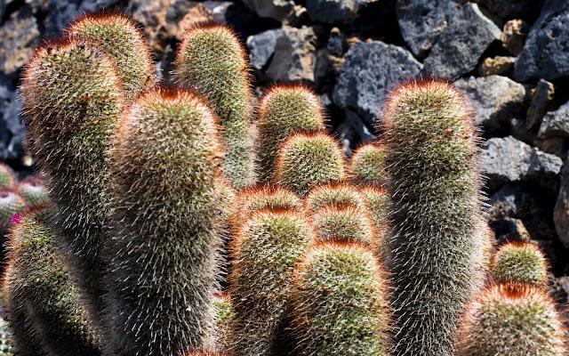 Cactus di Roberto Simonazzi