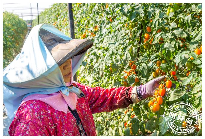 美濃澄蜜香玉女小番茄16