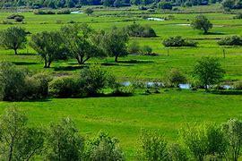 Obraz znaleziony dla: biebrzanksi park narodwoy