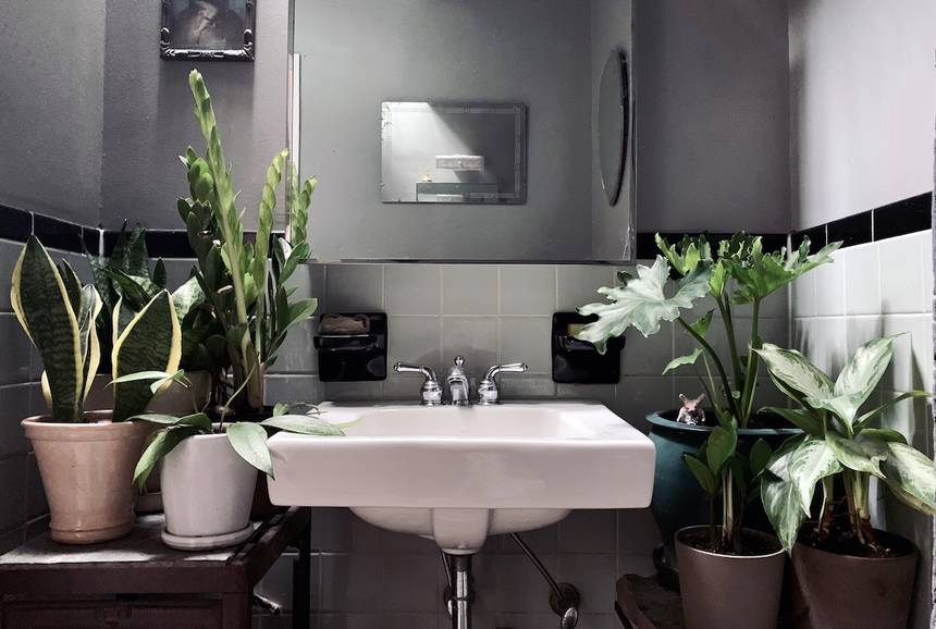 plantas de banho