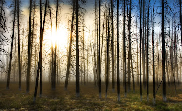 Photo: The Skeletons at Sunrise - Yellowstone  At one point when driving through Yellowstone a few weeks ago, I got out of the car and started walking right into the forest on the edge of the road. There was a thick fog and the morning sun was low, creating an unexpected box of light. I kept walking and walking until I found this area. It just felt right for whatever reason, so I set up to take this HDR.  from the blog at www.stuckincustoms.com
