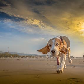 Selfie by Assi Dvilanski - Animals - Dogs Portraits ( doggie, sunset, dog portrait, sea, puppy, dog playing, seascape, dog )