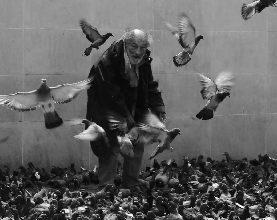 St. Francis of Assisi, 2013 by Dora Edelmann - People Street & Candids ( pigeons, paris, homeless, feeding, man )