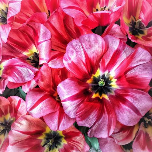 🌻🌺🌸🌼 by Baks Berbl - Flowers Single Flower