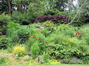 Photo: Looking back at rhodie and fern border