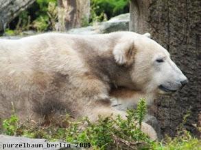 Photo: Knut entspannt ein wenig ;-)