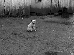 Photo: A small dog tries to stay dry on another rainy day in Apiai, São Paulo.