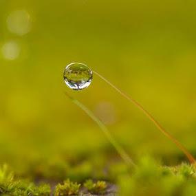 BENNER TAH INFO YG SAYA DENGAR...AWAL APRIL SEMUA JOBLO AKAN DI KANDANGKAN.... by ERFAN AFIAT SENTOSA - Nature Up Close Natural Waterdrops