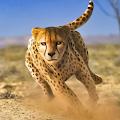 Savanna Simulator: Wild Animal Games APK