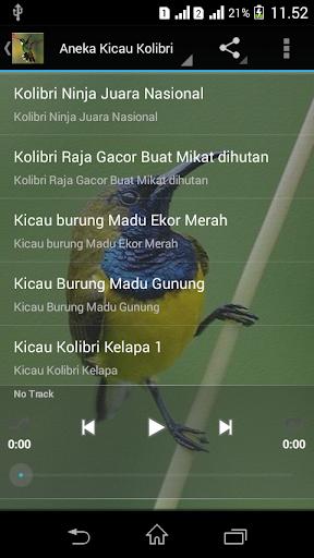 Kolibri Kelapa Mp3 : kolibri, kelapa, Suara, Burung, Kolibri, Android, Télécharger