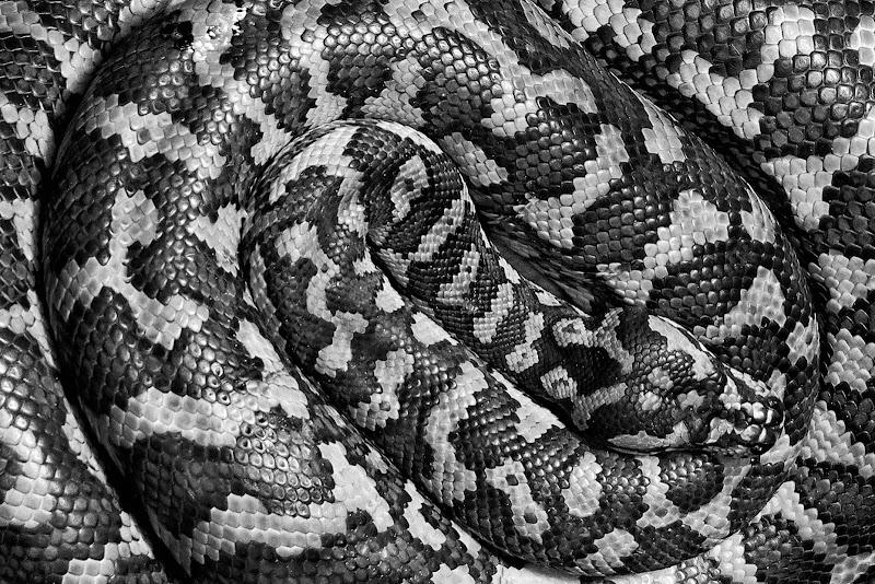 texture snake di Sergio Rapagnà