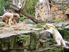 Photo: Marmorbaerchen Knut und eine weiss-gruene Gianna ;-)